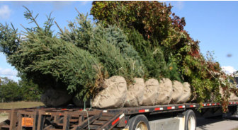 Landscaping Trees - Wisconsin Landscaper
