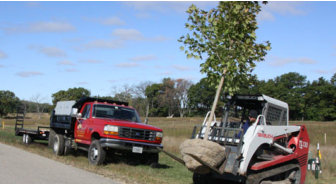 Tree Installation - Landscaping in Wisconsin
