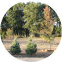 Acreage Plantings in Wisconsin