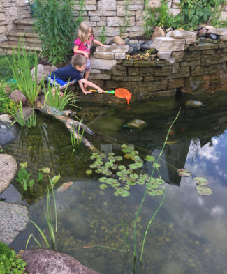 Kids catching frogs in backyard pond