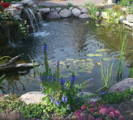 Backyard swimming pond with aquatic plants