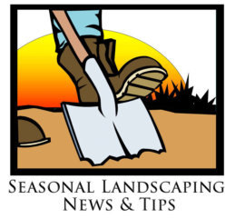 The Sunrise Scoop- Seasonal Landscaping News and Tips